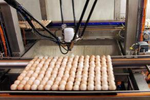 Automatische Entfernung Eier
