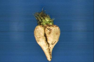 optical control sugar beet